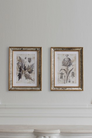 Fremont Botanical Studies Set of 2 Wall Art by Gallery Direct