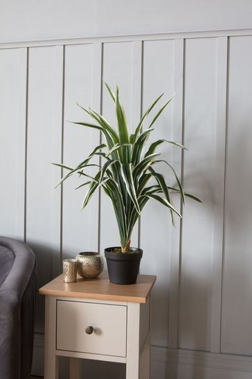 Faux Dracaena Plant by Gallery Direct