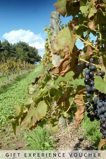 Luxury Vineyard Gift Experience