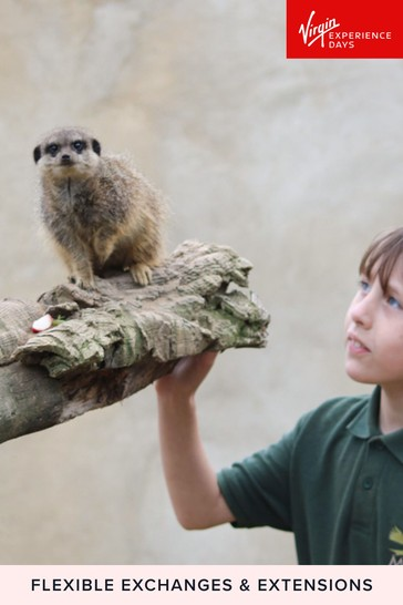 Meet And Feed The Meerkats At Millets Falconry Gift by Virgin Experience Days