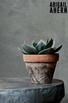 Olhao Succulent By Abigail Ahern