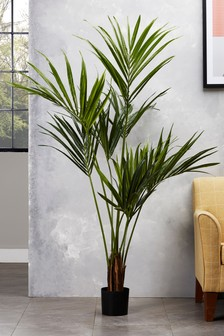 Artificial Kentia Palm