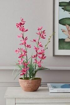 Artificial Orchid In Concrete Effect Pot Orchid In Concrete Effect Pot