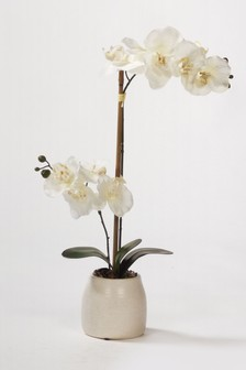 Bayswood 22 Inch Real Touch Orchid in a Ceramic Pot