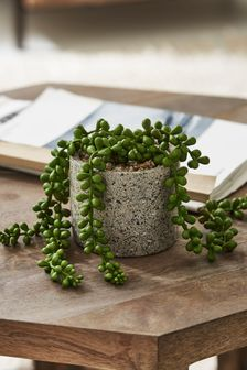 Artificial Trailing Succulent In Grey Pot