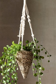 Artificial TrailIng Plant In HangIng Pot