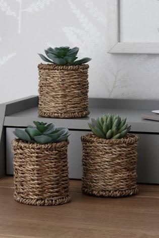 Set of 3 Artificial Succulents in Woven Pots