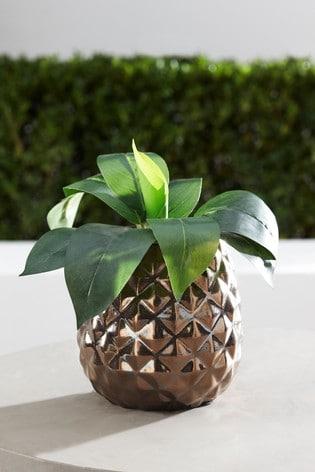 Pineapple Plant Pot