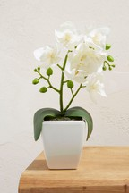 Small Orchid Pot