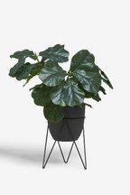 Artificial Rubber Plant In Stand