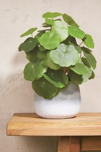 Artificial Monkey Plant In Pot