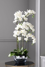 Collection Luxe Orchid