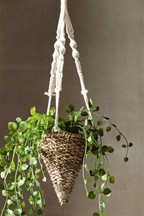 Delicate Hanging Trailing Plant