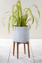 Cement Style Tall Planter