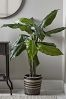 Cox & Cox Faux Potted Banana Plant