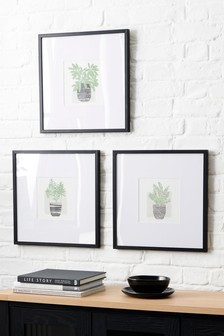 Set of 3 Botanical Framed Prints