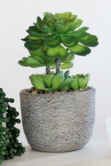 Artificial Succulent Tree In Pot