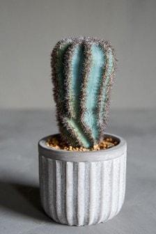 Abigail Ahern San Pedro Plant