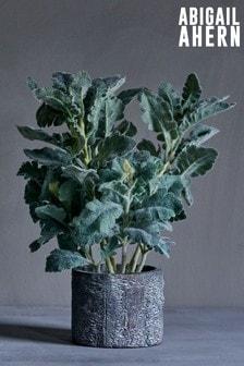 Abigail Ahern Silver Grass Plant