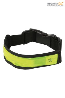 Regatta LED Dog Collar