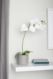 Artificial Orchid In Concrete Effect Pot