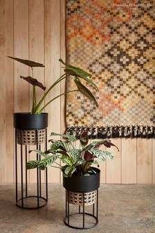 French Connection Tall Geo Cane Planter
