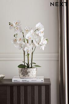 Artificial Flowers Plants Artificial Hanging Plants Next Uk