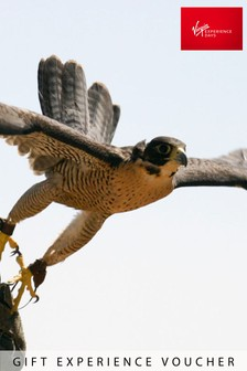 Extended Falconry Gift by Virgin Experience Days
