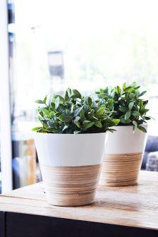 Set of 2 Ivyline Bamboo Planters