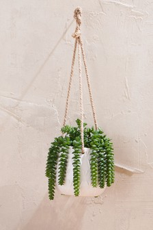 Ceramic Trailing Plant