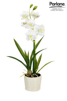Parlane White Potted Orchid