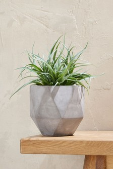 Aloe Faceted Pot