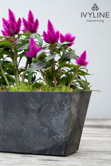 Artstone Ella Balcony Trough by Ivyline