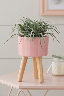 Artificial Aloe In Plant Stand