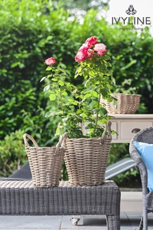 Set of 2 Polyrattan Baskets by Ivyline
