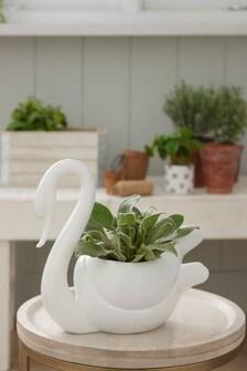 Contemporary Swan Planter