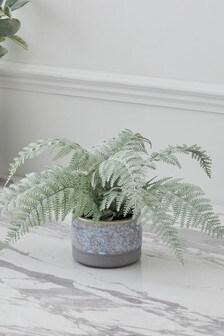 Artificial Fern in Ceramic Pot