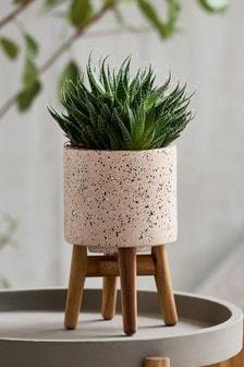 Маленький горшок для растений Terrazzo