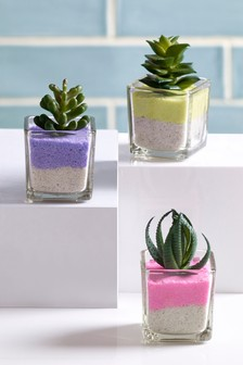 Set of 3 Sand Succulents
