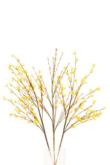 3 Pack Forsythia Stems