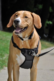 Rosewood Front Connect Padded Dog Harness