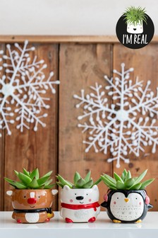 Set of 3 Real Plants Succulents In Christmas Character Pot
