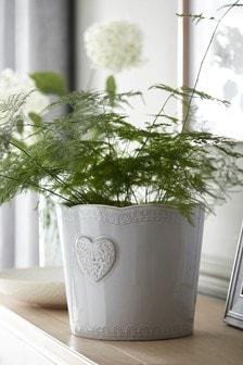 إناء نباتات قلب كبير