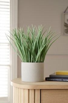Artificial Grass in Pot