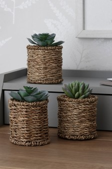 Set of 3 Artificial Succulents in Woven Pots
