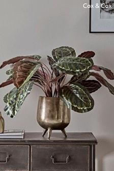 Cox & Cox Calathea-Kunstpflanze mit Topf