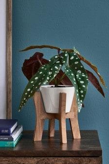 Artificial Plant In White Ceramic Pot