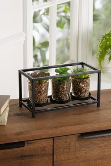 Set of 3 Artificial Succulents In Black Stand