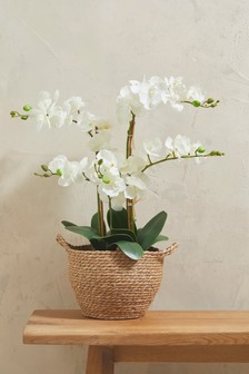 Artificial Orchid In Basket