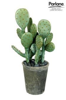 Kaktus v črepníku Parlane